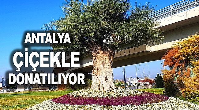 Antalya çiçekle donatılıyor