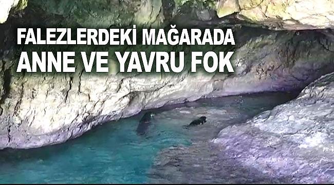 Falezlerdeki mağarada anne ve yavru fok