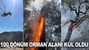 100 dönüm orman alanı kül oldu