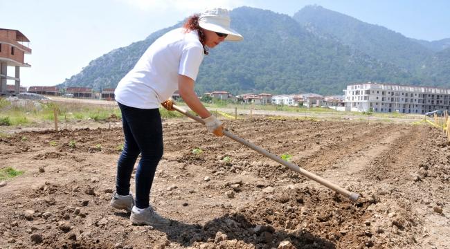 Belediyenin boş arazisini hobi bahçesine çevirdi