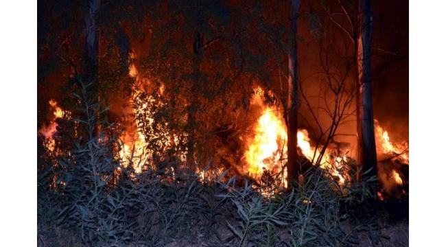 Arazi yangınında sulama pompası ve ağaçlar zarar gördü