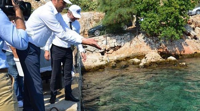 Denize 15 bin yavru balık bırakıldı