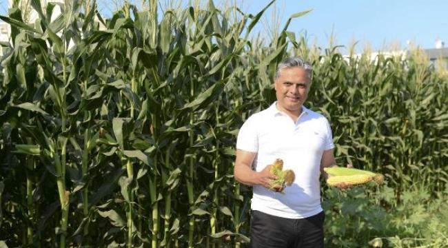 Muratpaşa, mısır hasadını tamamladı