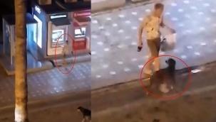 Köpeği ve ATM'yi tekmeledi