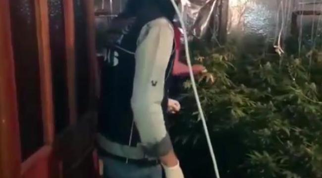 Kiralık villada kenevir yetiştiren 2 İranlıya gözaltı